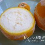 山久農園の三宝柑シャーベット
